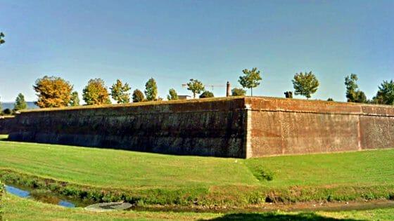 A Lucca salvo tiglio sugli spalti delle mura