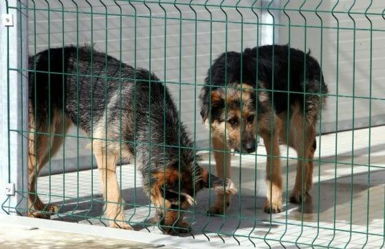 Un Garante degli animali in Toscana, presentata proposta di legge